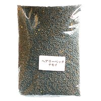 緑肥 ヘアリーベッチ ナモイ 種 1kg