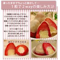 アイスクリーム ホワイト苺アイス(40粒アイスクリーム)|fbcreate|05