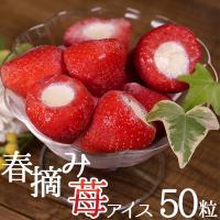 アイスクリーム 業務用 春摘み苺アイス(50粒)  人気のフルーツ・いちごの芯を丁寧に除いてコンデン...