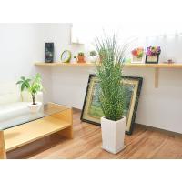 人工観葉植物 アラレア スクエア陶器鉢 光触媒加工