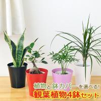選べる観葉植物4鉢セット鉢カバー付き