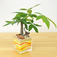 ミニ観葉植物 パキラ カラーサンド植え モンキーフィギュア付き