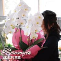 【商品について】 ・胡蝶蘭は誕生日や記念日のプレゼントや開店・開院祝の贈り物に。 ・命日等仏事の御供...