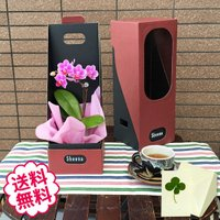 母の日プレゼントに一番人気のマイクロ胡蝶蘭BOX入り。素敵な専用のギフトBOXに入れてお届けいたしま...