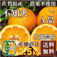 ■ 内容 品名・・・不知火(シラヌイ) A品サイズ混合 内容・・・2.5kg ※ご贈答に利用頂けるA...