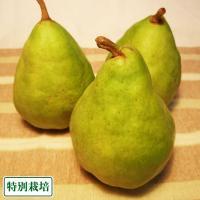 【B品】ル・レクチェ 約6kg 特別栽培 (長野県 さんさんファーム) 産地直送