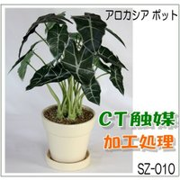 CT触媒 アロカシアポット sz-010 フェイクフラワー(造花)日本製