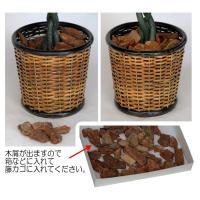 CT触媒 パキラツリー sz-032 フェイクフラワー(造花)日本製