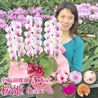 花の大きさ:9〜13cm 全高:55〜75cm リップに向かうグラデーションが美しい「桜姫」他代表的...