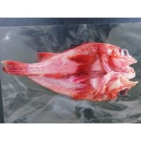 漁獲後船上で捌き冷凍した超新鮮な高級魚キンキ(キチジ・吉次)