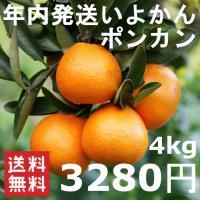 商品詳細 □年内にお届けいたします。  12月中旬より順次発送。  □サイズ混合  □良品・レギュ...