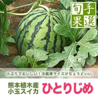 一玉一玉愛情込めて作られました熊本県植木町産の小玉すいか「ひとりじめ」です。 L〜3Lサイズ(1.5...