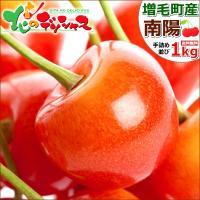 ■商品名:北海道産 さくらんぼ 南陽 ■商品内容:1箱 1.0kg(500g×2P) ※秀品/2Lサ...