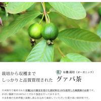 有機栽培 グァバ茶 2g×40包 国産(鹿児島産) 残留農薬・放射能検査済|gabainouen|02