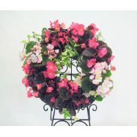 ナチュラル感いっぱいのカゴのリースに、開花期が長く途切れることなく花をつけてくれる(4月〜11月)ベ...
