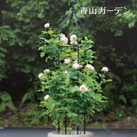 バラやクレマチスなどのつる性植物との相性に優れたオベリスクです。地植えや大き目プランターに最適です。...