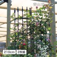 ■商品説明/  蔓バラやクレマチスなど、花を美しく引き立てます。 平面のトレリスと組み合わせて立体感...
