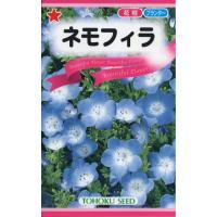 【種子】ネモフィラ トーホクのタネ