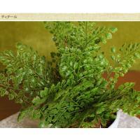 人工 観葉植物 フェイクグリーン オフィス フロア 玄関 造花インテリア アジアンタムブッシュ