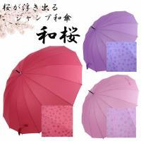 雨に濡れると桜が浮き出る♪ジャンプ傘和桜55cm雨に濡れるとあら?!不思議♪ 桜模様が現れます!!大...