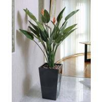 観葉植物 造花 光触媒 人工植物 グリーン /EX.ストレチア花付き160cm 115B80006
