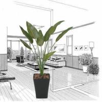 人工観葉植物 鉢植え インテリアグリーン 光触媒 造花 /ストレチア110cm 196A17029