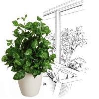 造花 観葉植物 光触媒 人工植物 グリーン /ピーコックS 43cm 237A4034