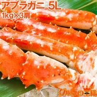 アブラガニ5Lサイズ×3肩<正規品・冷凍総重量3kg前後・1肩冷凍1kg前後・ボイル冷凍>  【アブ...