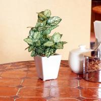 ペペロミアポット(光触媒)造花・観葉植物・インテリアグリーン