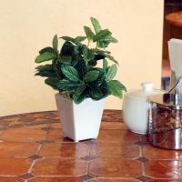 フィットニアミニポット(光触媒)造花・観葉植物・インテリアグリーン