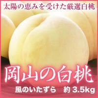 こちらの商品は岡山県で栽培されているすべての白桃にてお届けいたします。お客様のお届け時期に合わせて最...