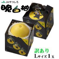 晩白柚 ばんぺいゆ  熊本県産 JAやつしろ ちょっと訳あり Lサイズ 1玉 約1.5kg 化粧箱入り  送料無料 お歳暮 ギフト 柑橘 蜜柑 みかん