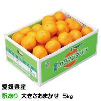 カラマンダリンはいろいろな柑橘の中で、最も樹になっている期間が長いため果汁がとても濃厚で、しかもジュ...