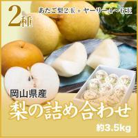 ギフト 梨  梨の詰め合わせ 岡山県 2種  あたご梨2玉+ヤーリー4~6玉   3.5kg 送料無料 梨 なし ナシ