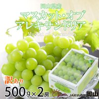 マスカットオブアレキサンドリアは岡山を代表する葡萄の品種です。粒がエメラルドグリーンに琥珀色がかった...