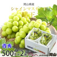 シャインマスカット晴王は、酸味が少なくしっかりとした甘味が有り、種無しで食べやすい葡萄です。種が無く...