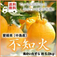 不知火 しらぬひ デコポンの品種名  愛媛県(中島産)  風のいたずら ちょっと訳あり 大きさおまかせ 約5kg 送料無料  贈り物 ギフト
