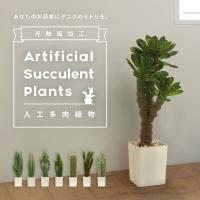 お部屋に緑を取り入れたい!でも… 「ありきたりな観葉植物はイヤ!」 「植物の世話に手をかけられない!...