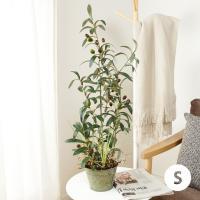 ■本物の植物のコピーではなく、インテリアとしてヨーロッパで生まれた人工観葉植物です。 お部屋の臭いや...