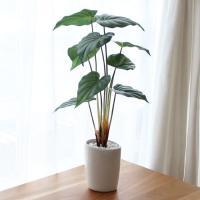 「テルクリン」「光触媒」選択可 フェイクグリーン 本品サイズ:高さ55cm×幅35cm×奥行35cm