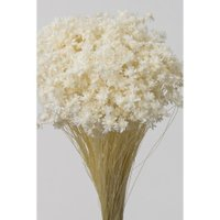 即日 ドライ 大地農園 スターフラワー ミニ 白 12g 30194-011 ドライフラワー花材 スターフラワー