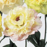 造花 アスカ ピオニー ライトピンク A-39510-13 01 |芍薬 牡丹 01  12本  造花 花材「さ行」 シャクヤク ボタン ピオニー