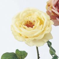 造花 アスカ オープンローズ アイボリー A-31578-91 01   造花 花材「は行」 バラ