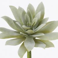 即日  造花 アスカ サッカレンテン フロストグリ−ン A-42184-051F 00   造花葉物、フェイクグリーン 多肉植物