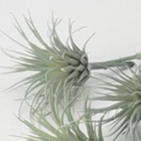 即日  造花 アスカ エアプランツ  1袋6本入  フロストグリ−ン A-42247-051F 00   造花葉物、フェイクグリーン 多肉植物