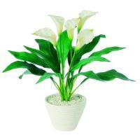 人工観葉植物 カラー 器タイプ:PラウンドL WH  91478※画像は器タイプ Pラウンド 器要確認 07  日限定  人工観葉植物「か行」 カジュアルポット