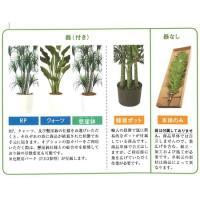 人工観葉植物 ディフェンバギア アモエナS  器タイプ:ラウンドウッド M  90478※器タイプを必ずご確認ください 07  日限定