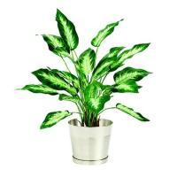 人工観葉植物 ディフェンバギア カミーラS  器タイプ:シルバーラウンド M  90480※器タイプを必ずご確認ください 07  日限定