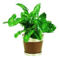 人工観葉植物 シンゴニウムS 器タイプ:ブッシュ 90485※画像は器タイプ ラウンドウッド 器要確認 07  日限定