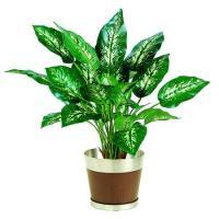 人工観葉植物 ディフェンバギア ホフマニーS  器タイプ:ラウンドウッド M  90482※器タイプを必ずご確認ください 07  日限定